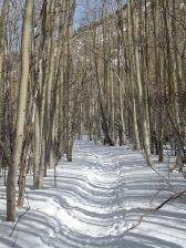 Scott Gomer Trail Hike 1/16/2010