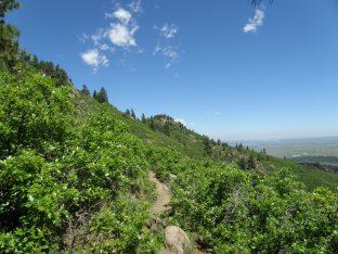 Carpenter Peak Hike 6/6/2010