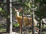 A doe, a deer, a female deer!