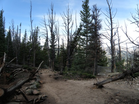 Trail junction in some of the burn area of the Ouzel Fire from 1978