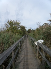 The boardwalk over and through wetlands towards the Currituck Sound