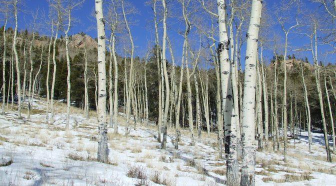 Hiking Mason Creek Trail Jan 17, 2015…