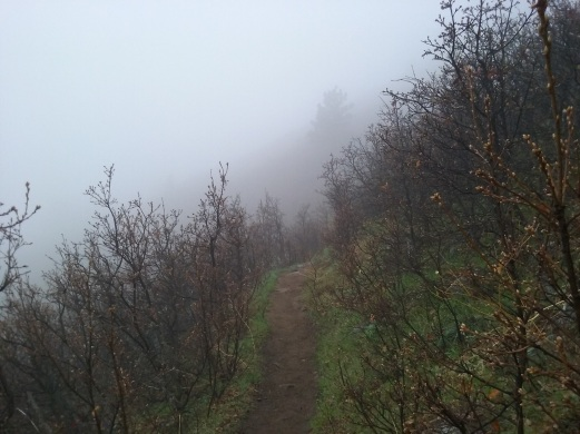A look back down the trail and the thickening fog.
