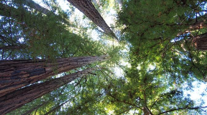 Hiking Big Basin Redwoods State Park, Oct 20, 2018…..